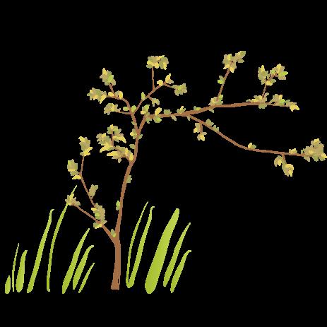 Baum Naturnahes Erleben